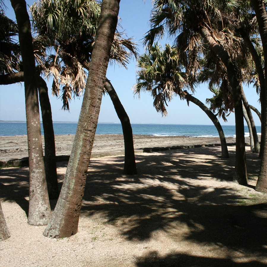 海と亜熱帯植物写真