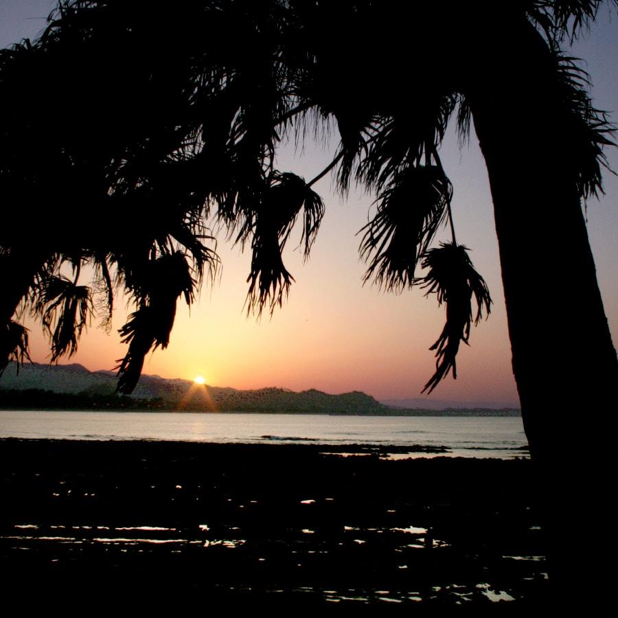 亜熱帯植物と夕日