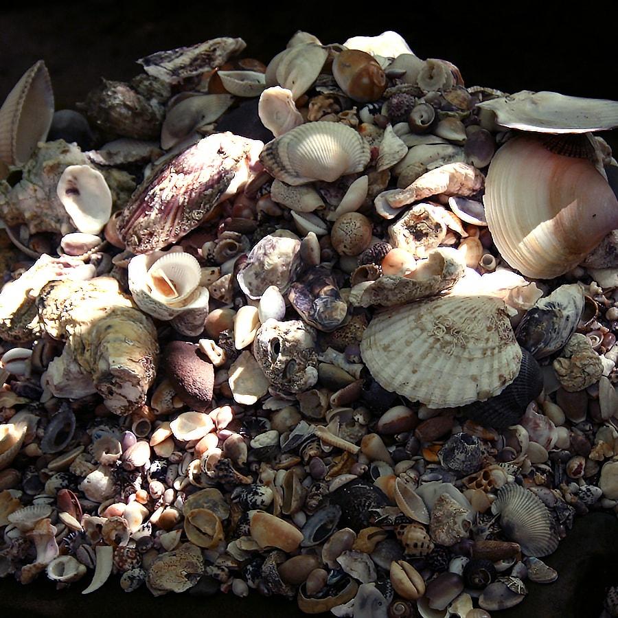 真砂の貝文写真